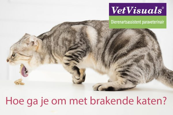 brakende katten