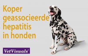 Koper geassocieerde hepatitis in honden