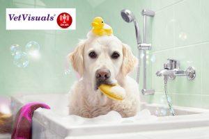 Podcast Dermatologische shampoos, mousses, sprays en wipes