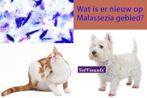 Wat is er nieuw op Malassezia gebied?
