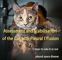 Assessment and Stabilisation of the Cat with Pleural Effusion