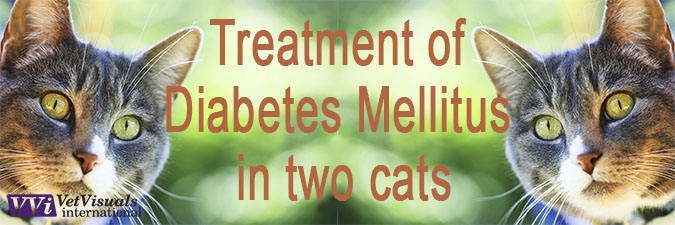 Treatment of Diabetes Mellitus in two cats