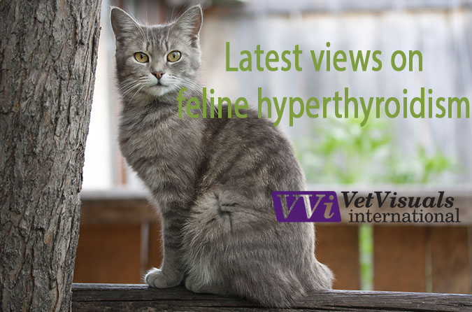 Hyperthyroidism is generally considered to be the most common endocrine disease of cats. It occurs most commonly in middle aged to senior cats with the median age of diagnosis reported to be 13 years