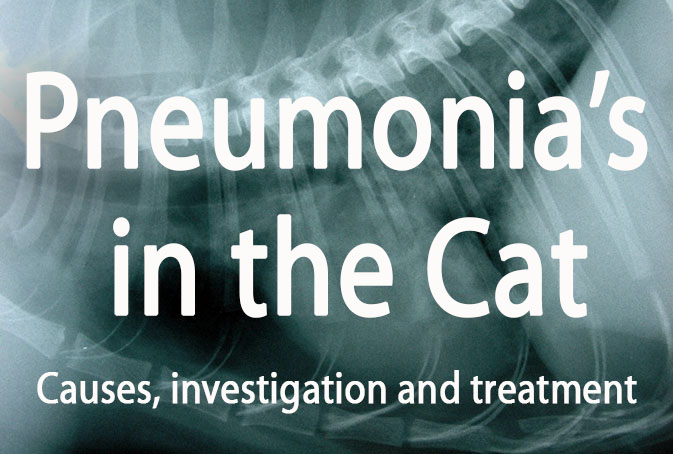Pneumonia's in the Cat Respiratory Disease kerry simpson veterinary cpd online education
