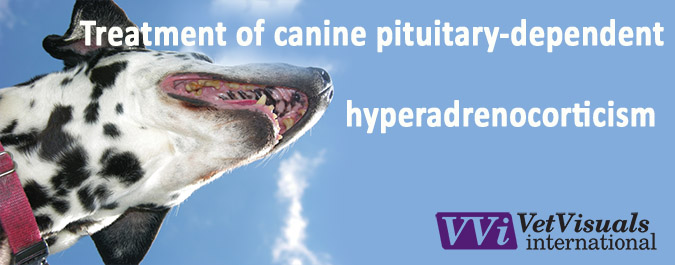 Canine pituitary-dependent hyperadrenocorticism: Treatment