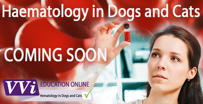 Vetvisuals online course When to perform hematology: in case of anemia, spontaneous bleeding, suspicion of infectious disease in dogs and cats